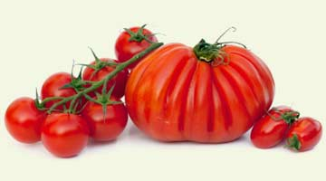 Home-tomatoes-img